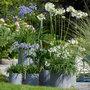 Bloeiende-tuinplanten