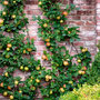 Klimfruit