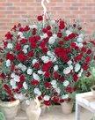 Hanganjer-roze