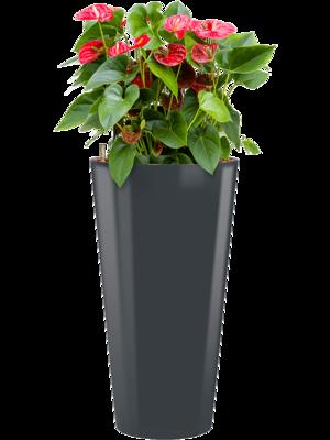 Anthurium sierra incl pot Style antraciet