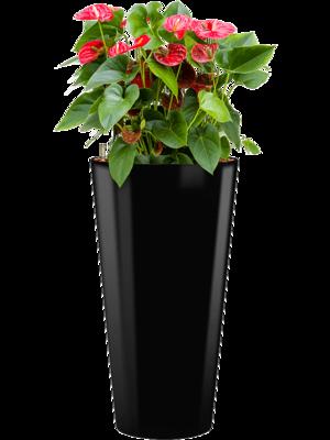Anthurium sierra incl pot Style zwart