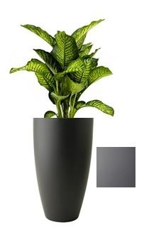 Dieffenbachia Maroba in Pure Soft Round High mat antraciet