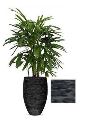 Rhapis Excelsa in Vaas Capi Nature Elegance de Luxe zwart