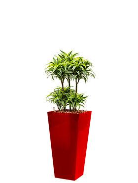 Dracaena surprise incl pot Style Square rood