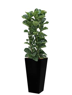 Ficus lyrata bambino incl pot Style Square zwart