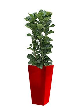 Ficus lyrata bambino incl pot Style Square rood