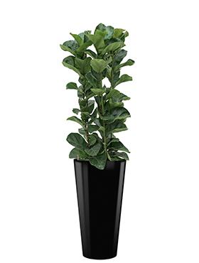 Ficus lyrata bambino incl pot Style zwart