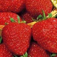 Aardbeienplant - 3 stuks