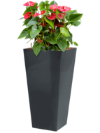 Anthurium sierra incl pot Style Square antraciet
