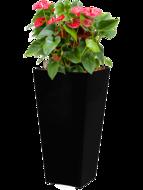 Anthurium sierra incl pot Style Square zwart