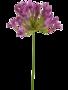 Agapanthus - Tak Purple (artificial)