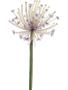 Allium - Tak Lilac (artificial)